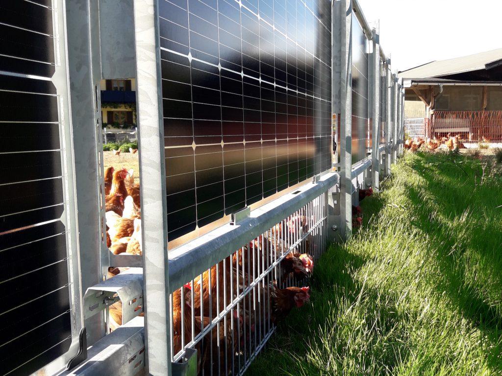 Solarzaun als Einfriedung für Hühner