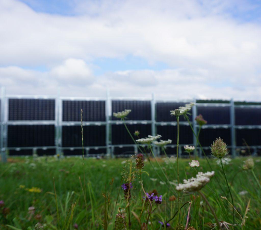 Wildblumenwiese zwischen den Modulen