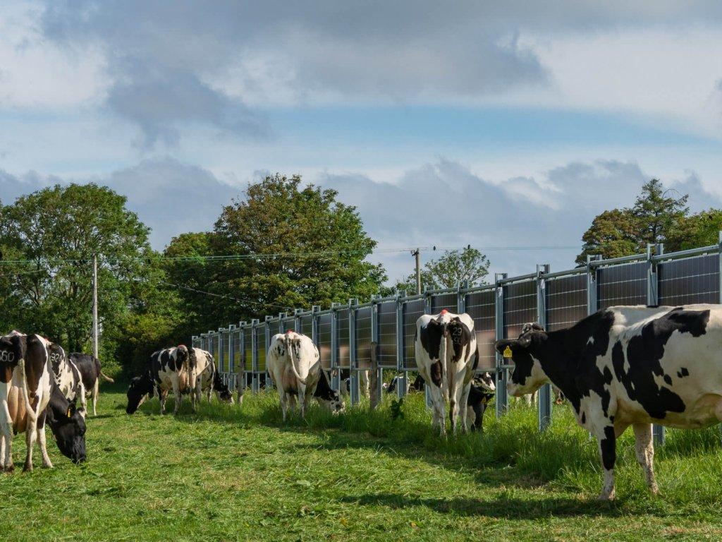 Solarpark Farrels (Irland)