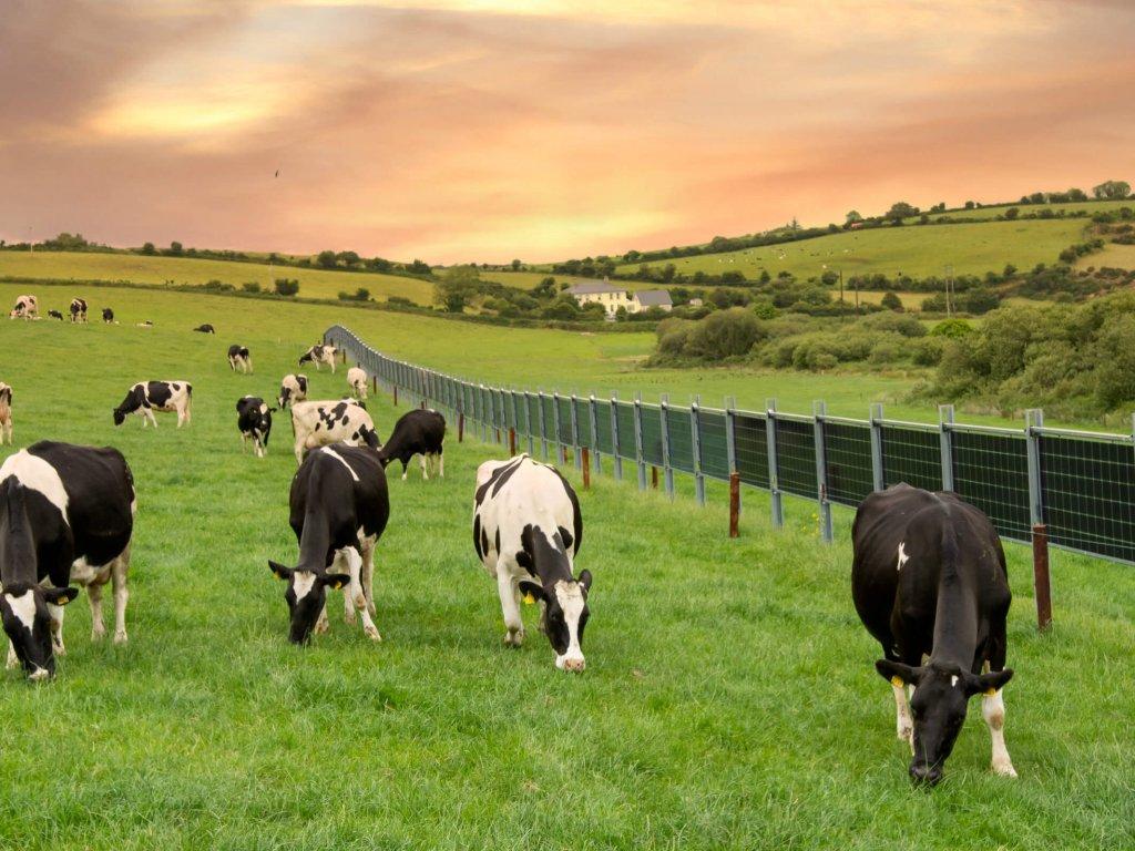 Solarzaun Foran (Irland)